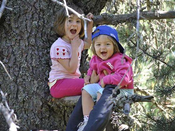 Family: weekend sugli alberi